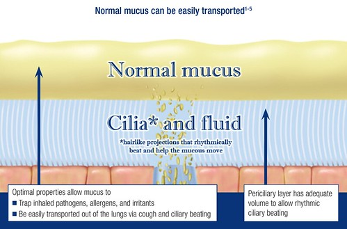 normal mucus transport