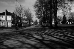 Veins (box of lettuce) Tags: park street trees light bw sun vancouver shadows willow 19th lightroom heatherpark