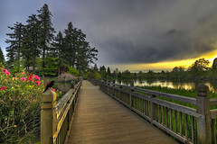 Bridge in Crystal Springs Rhododendron Garden at Sunset - HDR (David Gn Photography) Tags: wood bridge flowers trees sunset sky lake color male nature birds clouds oregon portland landscape pond wildlife parks cattails pdx hdr crystalsprings redwingedblackbird redwingblackbird rhododendrongarden springseason canoneos7d sigma1020mmf35exdchsm