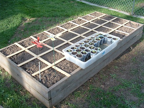 Raised Bed Divided into Square Feet