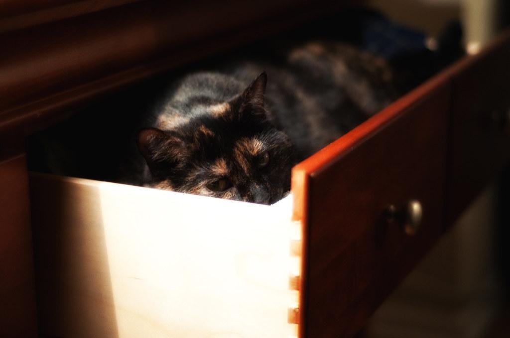 My Kitten.
