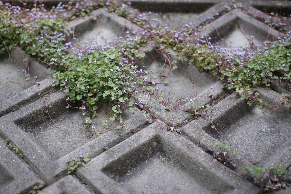 散歩中 植物