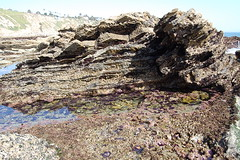 tidepool4 (timwinter79) Tags: range tidepools tidepool tidal sanpedrotidepools