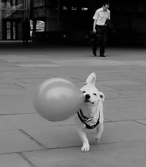 It's a wonderful life (Ian Brumpton) Tags: street blackandwhite bw london blancoynegro blackwhite candid itsawonderfullife summerholiday streettheatre londonist londonstreetphotography thelittledoglaughed scattidistrada blackwhiteemotions aimlessstrolling lifesincongruities littledogwholaughed