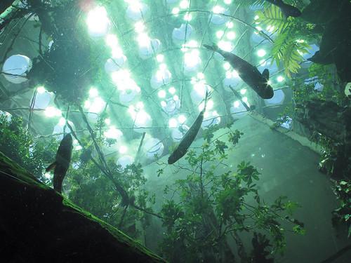the bottom of the aquarium