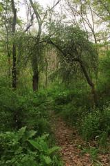 Forest Road (RASHIDIFAR) Tags:      dargaz    rashidifarm  tandore