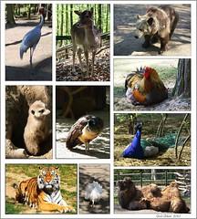 Zoo-Eberswalde