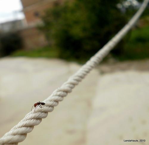 En la cuerda floja...
