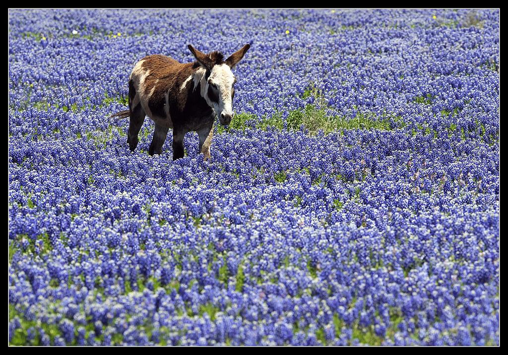 0428_loc_Wildflowers1