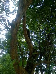 Image0265