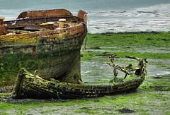 Old ships (lovestruck.) Tags: city sea seaweed rotting river geotagged boats wooden ruins decay ships hampshire holes panasonic algae rotten southampton derelict waterway ruined itchen northambridge challengeyouwinner tz7 geo:lat=5091615 geo:lon=1381944