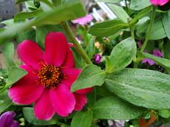 Flower In the Neighborhood