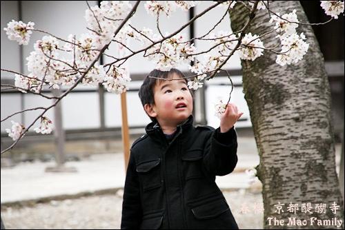 春醍醐寺 童心