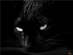 Black Beauty.... (fl_amit) Tags: portrait black beautiful beauty animal mystery cat blackcat mammal eyes magic kitty evil myth bestofcats flickraward bestcapturesaoi flickraward5 flamit boc0610 rememberthatmomentlevel1 rememberthatmomentlevel2 rememberthatmomentlevel3