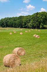 Hanover Fields (