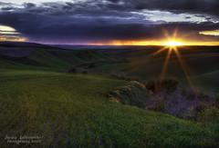 Palouse Wet Sunset (janusz l) Tags: statepark sunset sun wet colors field rain dark landscape geotagged farm hills crops washingtonstate hdr lyonsferry palouse janusz leszczynski mywinners lyonsferrystatepark 012216 geo:lat=46738585 geo:lon=117486364