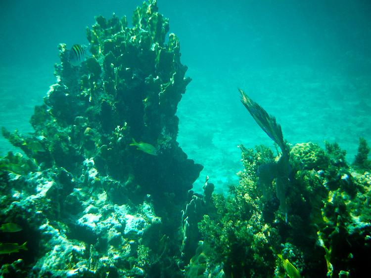 20100503-Jamaica WP-4134