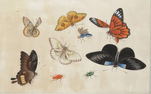 Butterfly Album d