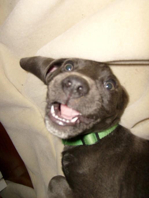 smiling milton
