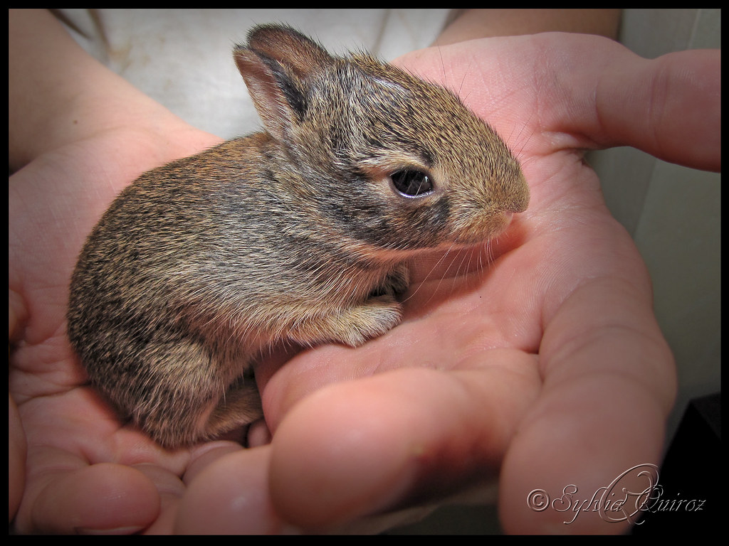 Saved Baby Bunny