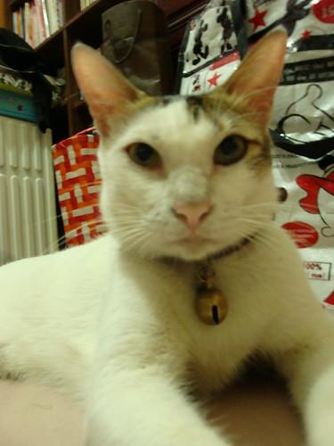 [协寻成猫] 我家的胖猫蘑菇失踪了. - 台中世联会