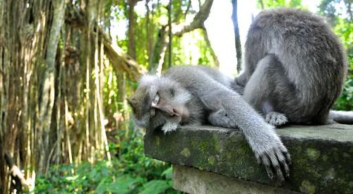 Monkey Forest, Ubud, Bali 040