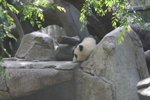 Yun Zi