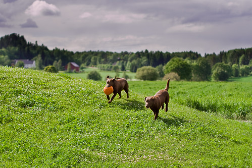 Tufte Dogs