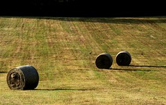 ROULANT 3 di 3 (Maria Grazia Marrulli) Tags: vacation birds italia ombre uccelli perugia viaggio umbria norcia balle agricoltura cereali preci cilindri paesaggicampestri