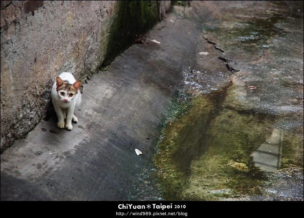 Cat。第一眼膽怯相望01.JPG