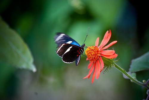 butterfly, meet flower