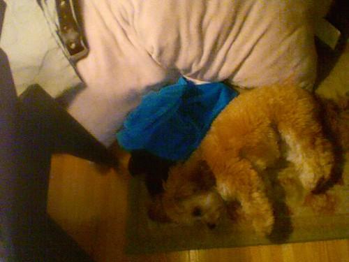 Lucy, asleep on the bedroom floor