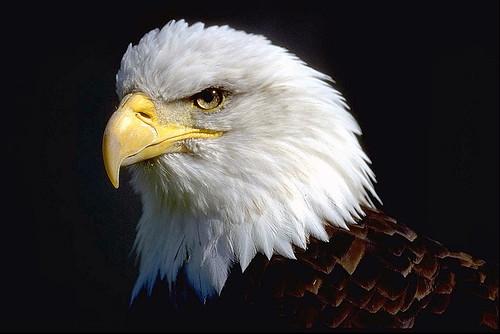 Old Eagle Eye / Photo by Bill Proctor