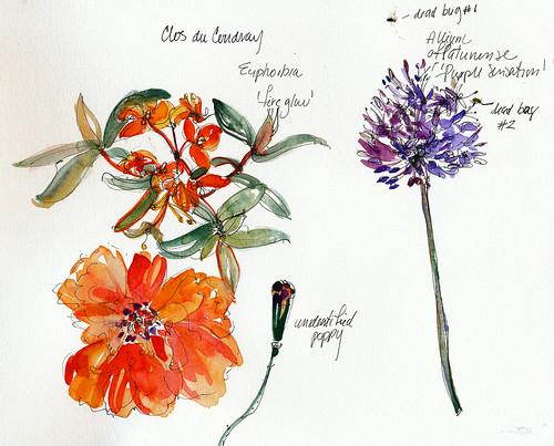 Poppy, euphorbia, allium, Clos du Coudray