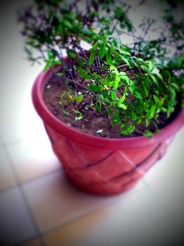 Big pot