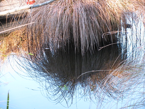 Pound Ridge Reflections 3