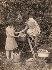Apple harvest time (Abaraphobia) Tags: family flowers 1920s girls england tree english grass fashion sepia vintage garden hair children photo blackwhite photographer britain father snapshot lawn harvest snap nostalgia dresses baskets nostalgic apples british ladder idyllic shrubs foundphoto watford foundimage twenties cassioroad mreaife