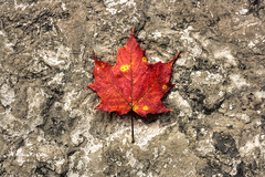 Niagara Falls - Canada 11 (Daniel Mennerich) Tags: canon dslr eos hdr hdri spiegelreflexkamera slr canada kanada