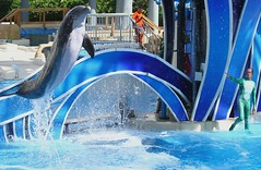 Blue Horizons (Seals4Reals) Tags: world show park blue sea baby aquarium orlando marine florida dolphin united malia believe killer whale orca states seaworld calf kayla katina horizons bottlenose nalani trua lesquish