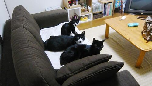 3匹の愉快なニャンズと愉快な飼い主のダラダラ日記