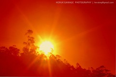 Sunlight......... (Heruk Gamage) Tags: red sun art beautiful beauty sunrise ray natural super scene sunburst srilanka sunray flickrtravelaward herukgamage