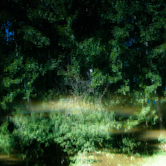 Trees In Water 114 (noahbw) Tags: d5000 kokosingriver nikon abstract distortion forest landscape natural noahbw reflection river square summer sunlight trees water woods