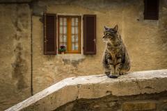 Il gatto alla finestra.jpg (Darren Berg) Tags: tuscan cat italy window shutter stone wall pose decay