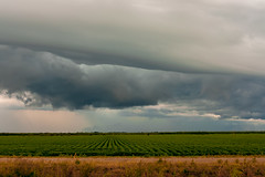 Mississippi Delta Storms approaching. (PAULALSOBROOKS) Tags: vast fields cotton rain clouds alsobrooks tamron canon storms delta mississippi