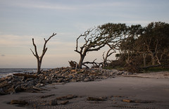 Morning Calm (Todd Evans) Tags: canon 77d jekyllisland georgia ga beach coast morning sunrise driftwoodbeach