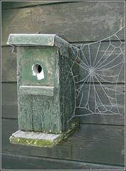 Winterweb (Ab Wisselink) Tags: winter white cold green barn groen spiderweb birdhouse wit spinneweb vogelhuis
