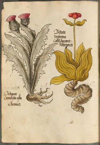 Arzneipflanzenbuch, 1525 q