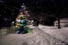 Prestbury Village Christmas Tree (Oliver Wood Photography) Tags: winter decorations snow ice night christmastree coldweather festivities prestbury