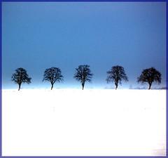 Blue Sky, white Field (Tobi_2008) Tags: schnee winter sky white snow cold tree nature germany landscape deutschland saxony natur himmel ciel sachsen tobi kalt landschaft weiss allemagne baum germania bej anawesomeshot theunforgettablepictures thesecretlifeoftrees artofimages bestcapturesaoi