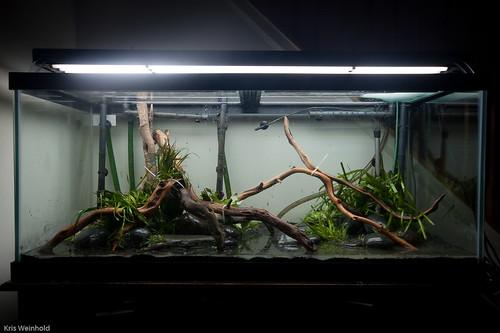 Ricou0027s Tank